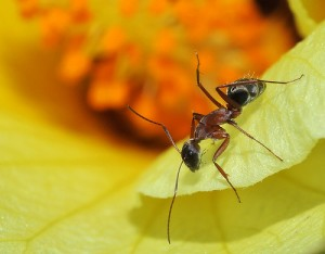 Top 3 Pesticides Used For Ant Control And Their Effects On Health